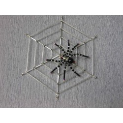 Pavouk na pavučině velká