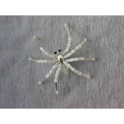 Pavouk sněžný, průměr 9 cm